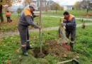 Počela jesenja sadnja drveća u Kragujevcu