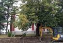 Radovi kod Sabornog hrama u Kragujevcu